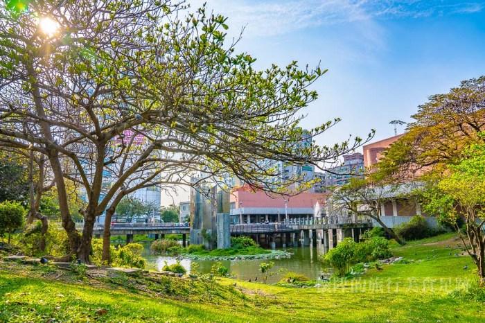 【台南景點】台南城市小旅行,來找尋台南最大的鴿子樹:台南文化中心
