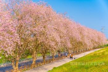 【台南景點】台南最美櫻花香榭大道,這片刻的浪漫只想與妳共度~