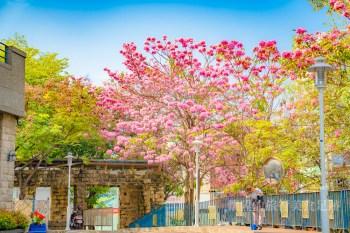 【台南景點】台南的浪漫粉色系,竹溪河畔旁的期間限定風景