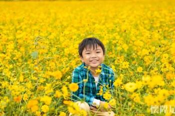 【台南景點】花都開好了!今年秋冬最浪漫波斯菊花海來襲:台南後壁花海