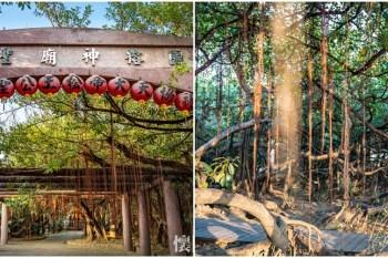 【台南景點】台南另類奇觀景點!一棵樹成就占地「三千坪」的公園:十二佃神榕