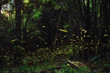 【台南景點】2021台南賞螢火蟲看這邊!台南全區賞螢火蟲好去處~