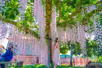 【台南景點】白河粉色系石斛蘭蝴蝶瀑布,坐落在村莊裡的私密景點