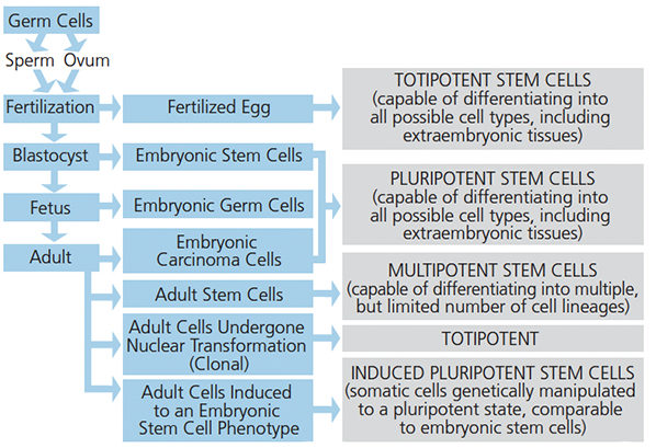 Stem cells flow chart