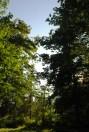 Trees in my backyard