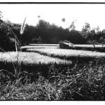 Rizières à Lawang, Sumatra, Indonésie, prise de vue argentique, JP Devals