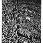 Fougère, macro, photo naturaliste, noir et blanc