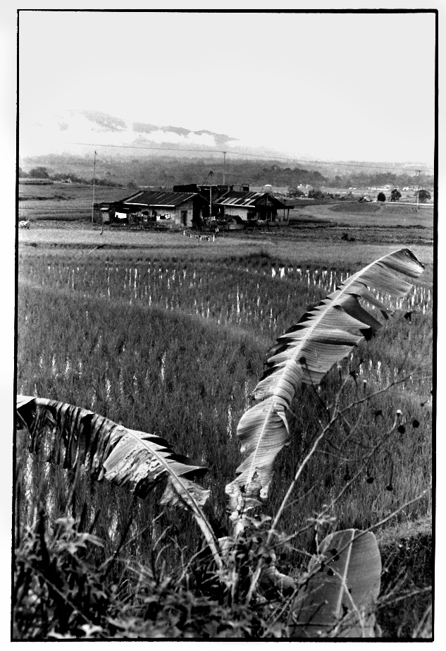 Le bananier, photographies argentiques, Devals
