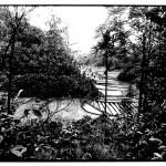 Rizières en forêt, Indonésie, noir et blanc argentique, Jean-Pierre Devals