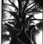 Sous le palmier, Laos, photographie noir et blanc