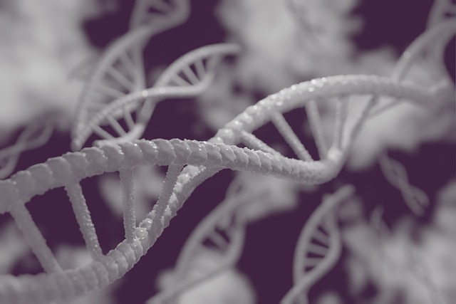 Ancestry DNA coupons