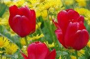 Rõõm on sinus eneses olemas. Leia ta üles ja rõõmusta! / Joy lives within you. Just find it and rejoice!