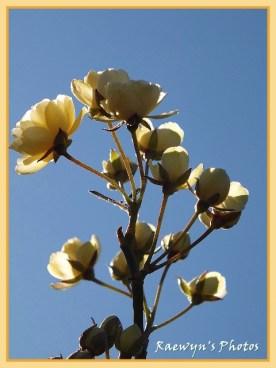 Minature Roses (480x640)