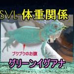 山内イグアナ研究所(Yamanouchi Iguana Laboratory)グリーンイグアナの体重の変化50グラムから50日で130グラムになったSVL-体重関係