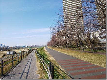 20190224多摩川河川敷3