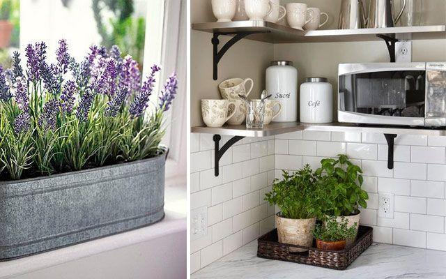kitchen_plants_01