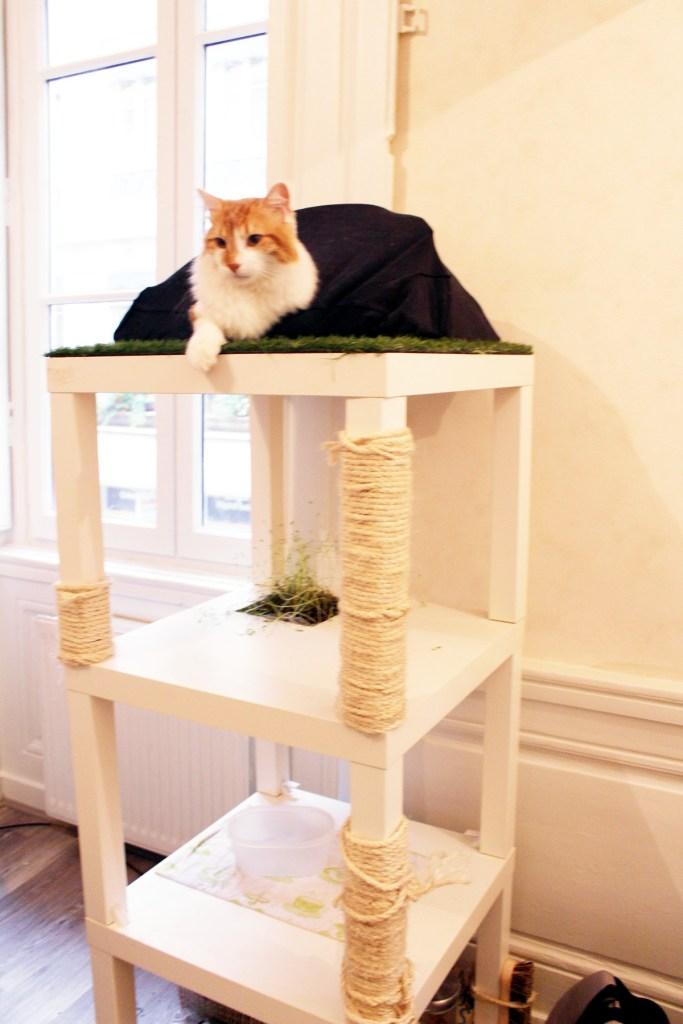 Tente pour chat arbre à chat DIY maison