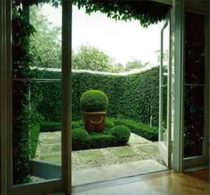 boxwood knibb design