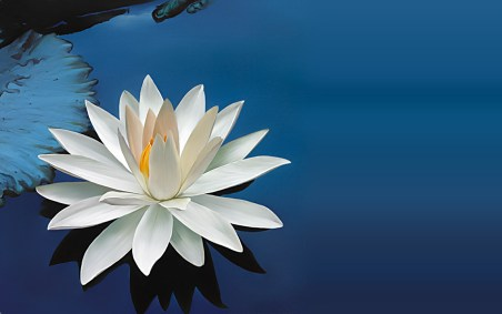 The photo is taken from ... http://7-themes.com/6793085-free-lotus-flower-pictures.html