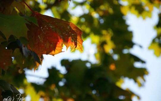 Ősz - Herbst - Autumn