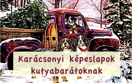 Karácsonyi képeslapok  kutyabarátoknak