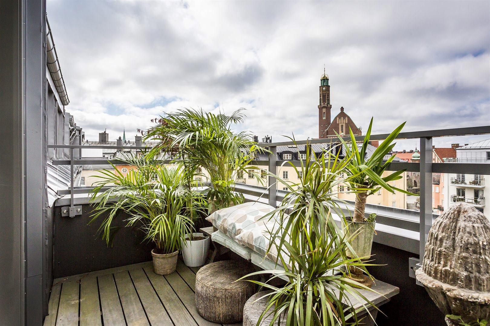балкон комнатные растения цветы