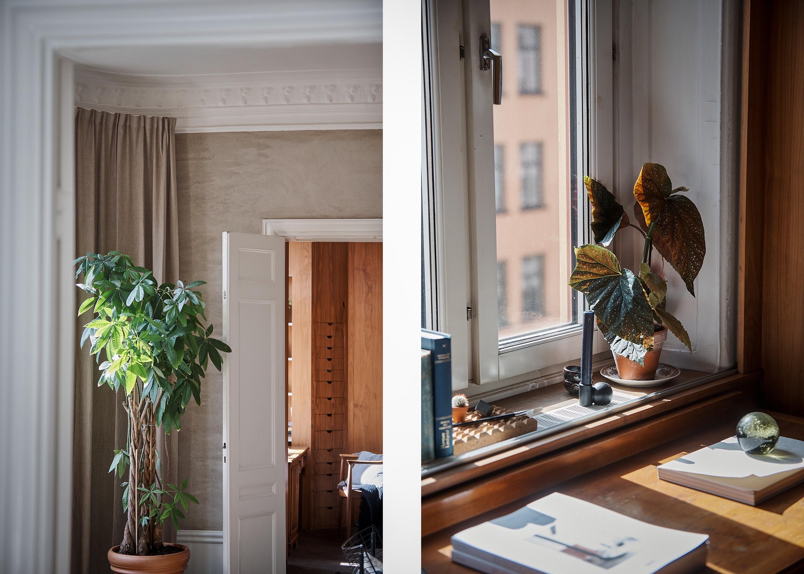 room plant window sill
