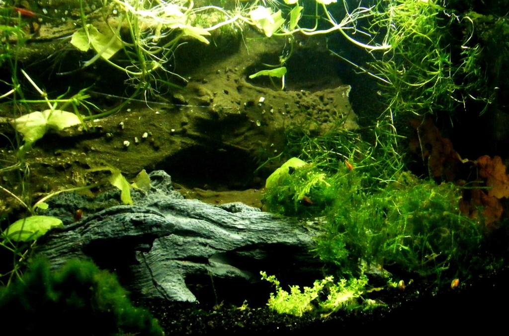 Beautiful aquarium plants for aquascape