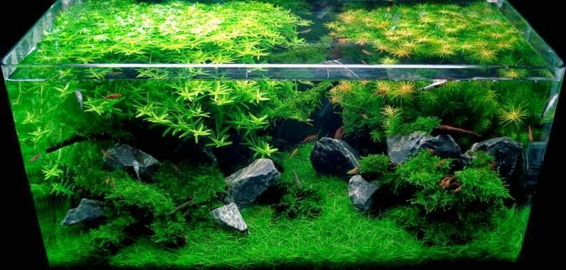 aquarium hardscape wood