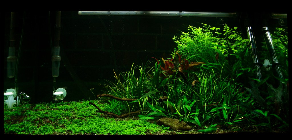 aquascaping for beginners make