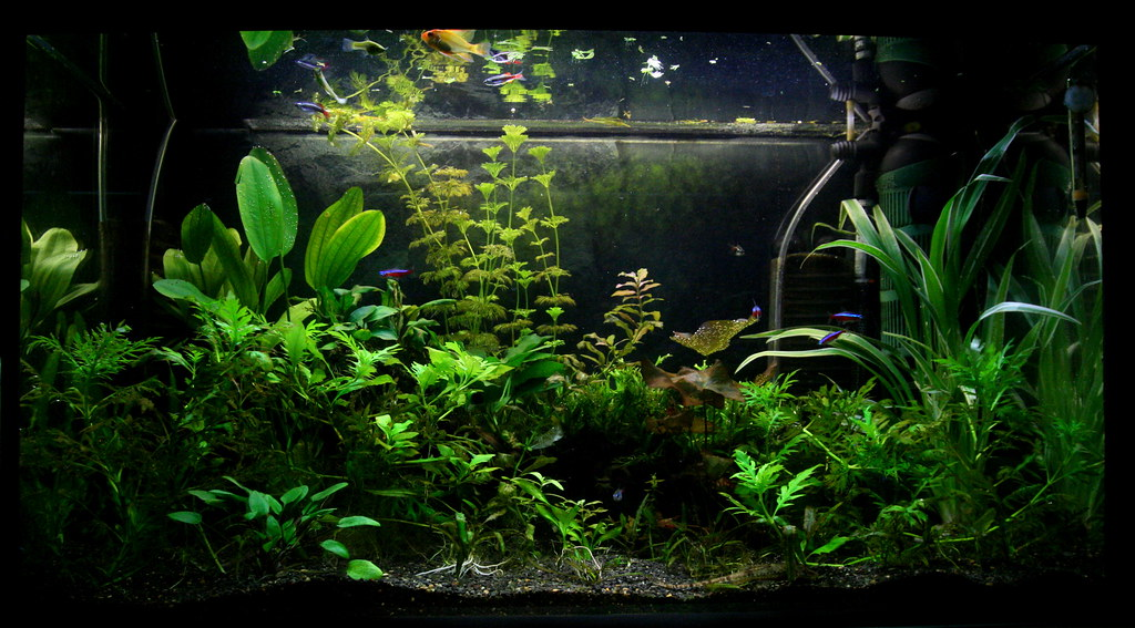 aquascaping for beginners substrate