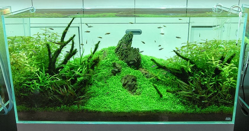 are aquascaping for beginners india