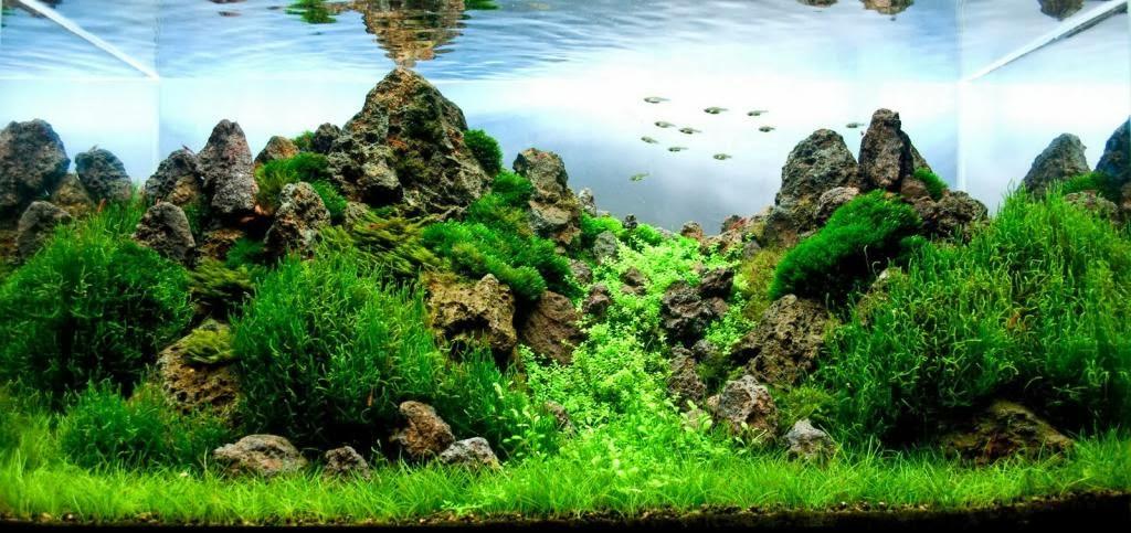 beautiful landscape for aquascape design