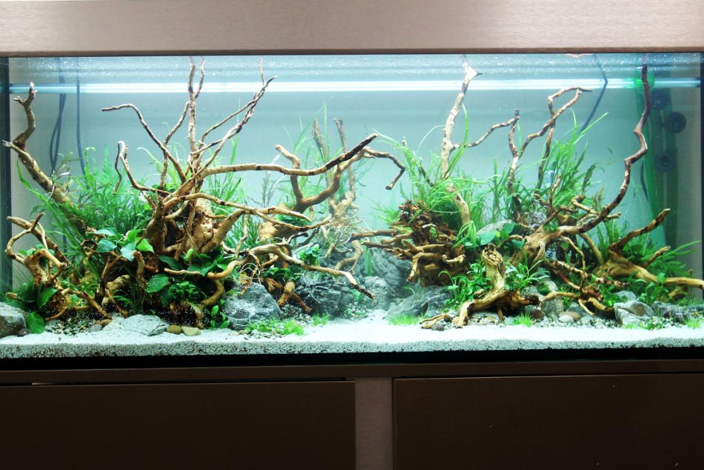 fish for hardscape aquarium