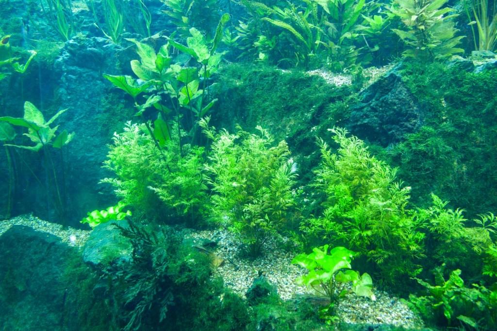 green aquarium plants