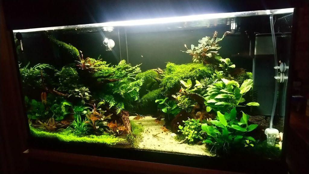 hardscape aquarium ideas