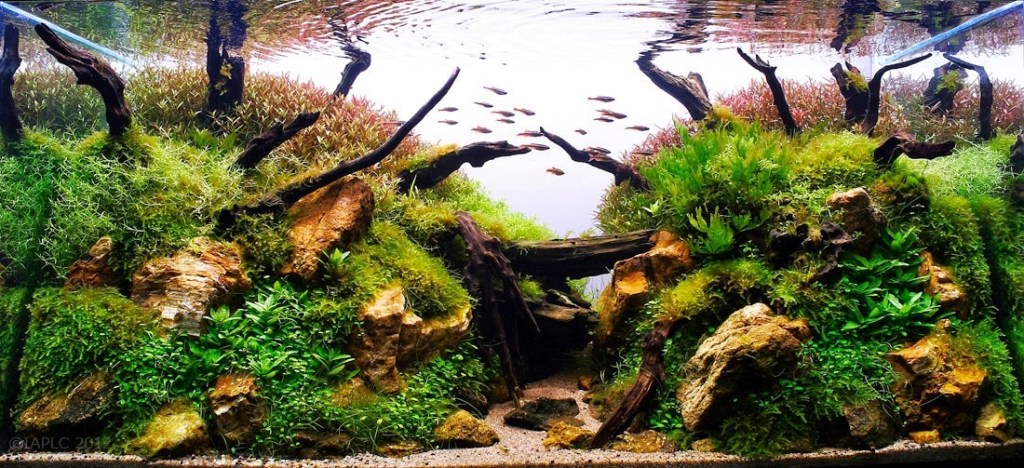 how many aquascape for beginners