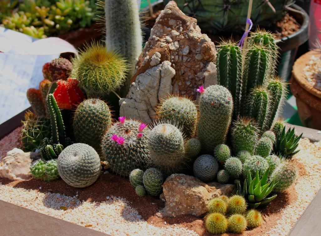 mini garden landscape design with cactus