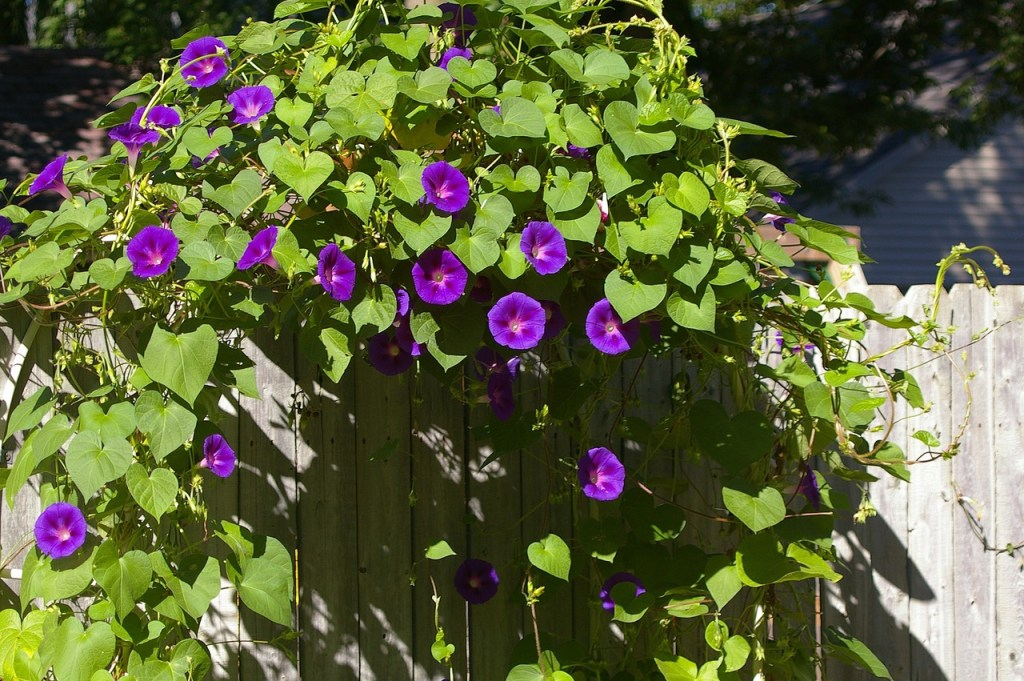 mini garden images with climbing plants
