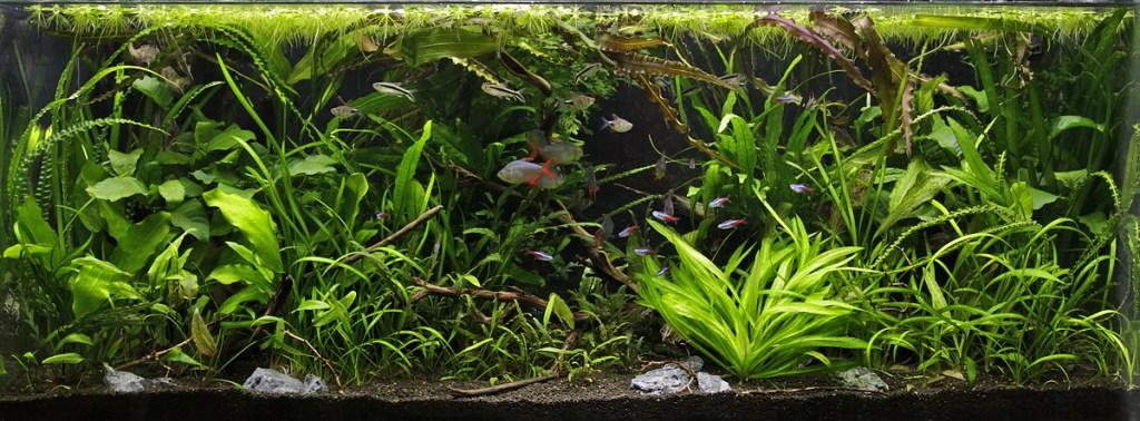 with aquascaping for beginners uk