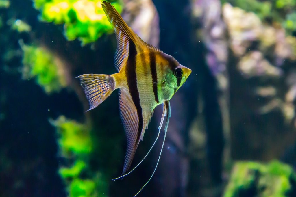 yellow and black fish aquascape design with nature