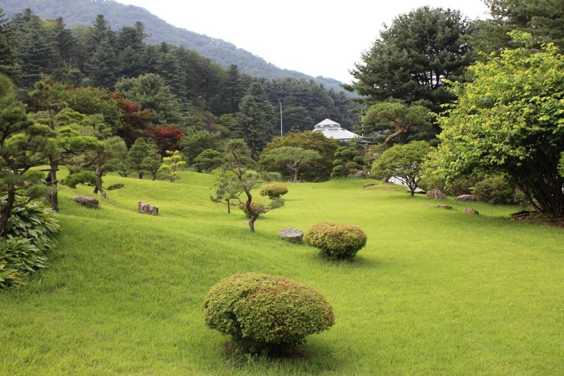 tree grass structure lawn meadow backyard