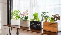 Decoration tips draw for the windowsill  inspiration for ...