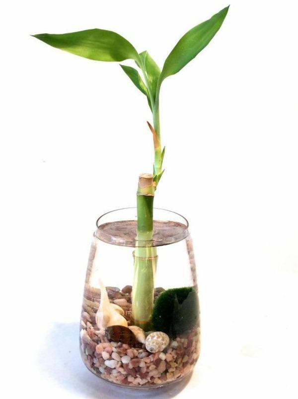 Indoor Plants Good Health