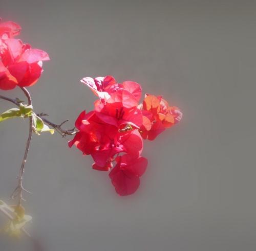 Flores  Santa Rita  DecoracionIN