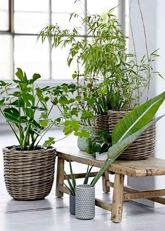 Sabes cul es el mejor sitio para colocar tus plantas en