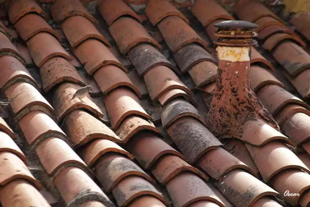 Diferentes aspectos vinculados a los techos de tejas
