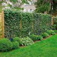 16 Affordable Backyard Privacy Fence Ideas