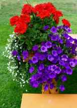 11 Fresh and Easy Summer Container Garden Flowers Ideas