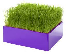 decorar con verde y lila